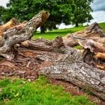 Travel Theme - Wood