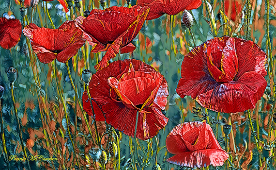 Poppies....in remembrance